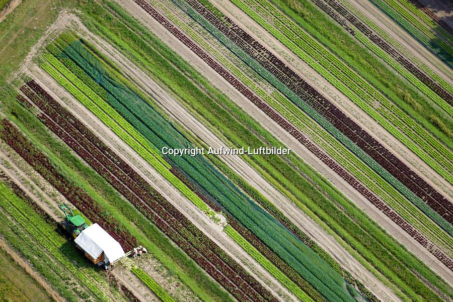 Salaternte: EUROPA, DEUTSCHLAND, HAMBURG (GERMANY), 26.08.2019: Traktor Erntemaschine auf Feld zur Ernte von Salat