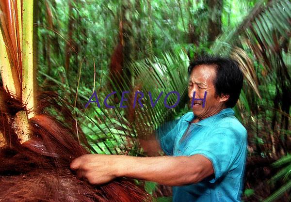 &Iacute;ndioArmando Garrido Werekena, morador da comunidade de Anamoim no alto rio Xi&eacute;,corta com uma afiada l&acirc;mina as fibras da &aacute;rvore de pia&ccedil;aba (Leopold&iacute;nia p&iacute;assaba Wall),antes de cort&aacute;-la. A  &aacute;rvore que normalmente aloja os mais variados tipos de insetos representando um grande risco aos &iacute;ndios durante sua coleta . A fibra  um dos principais produtos geradores de renda na regi&atilde;o &eacute;  coletada de forma rudimentar. At&eacute; hoje &eacute; utilizada na fabrica&ccedil;&atilde;o de cordas para embarca&ccedil;&otilde;es, chap&eacute;us, artesanato e principalmente vassouras, que s&atilde;o vendidas em v&aacute;rias regi&otilde;es do pa&iacute;s.<br />Alto rio Xi&eacute;, fronteira do Brasil com a Venezuela a cerca de 1.000Km oeste de Manaus.<br />06/06/2002.<br />Foto: Paulo Santos/Interfoto Expedi&ccedil;&atilde;o Werekena do Xi&eacute;<br /> <br /> Os &iacute;ndios Bar&eacute; e Werekena (ou Warekena) vivem principalmente ao longo do Rio Xi&eacute; e alto curso do Rio Negro, para onde grande parte deles migrou compulsoriamente em raz&atilde;o do contato com os n&atilde;o-&iacute;ndios, cuja hist&oacute;ria foi marcada pela viol&ecirc;ncia e a explora&ccedil;&atilde;o do trabalho extrativista. Oriundos da fam&iacute;lia ling&uuml;&iacute;stica aruak, hoje falam uma l&iacute;ngua franca, o nheengatu, difundida pelos carmelitas no per&iacute;odo colonial. Integram a &aacute;rea cultural conhecida como Noroeste Amaz&ocirc;nico. (ISA)