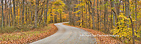 63995-00910 Road in fall, Brown County State Park, IN