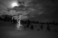 Troll night and old tree,Trollheimen,Norway Home decor,