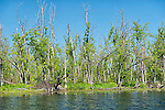 Appleton Wetland ANSI, Lanark Co, Ontario, environmental damage by hydro dam ding