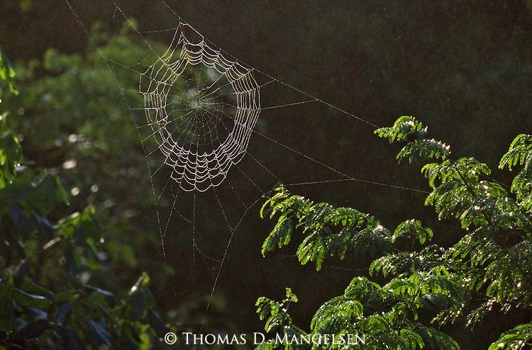 Sunlight strikes a spider web in green brush.