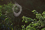 Sunlight strikes a spider web in green brush.