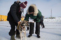Vet tech Megan Hackman holds a Ray Redington Jr. dog as chief veterinarian Stu Nelson examines the dog during the Leonnard Seppala Humanitarian award review in the Nome dog lot on Wednesday March 14th during the 2018 Iditarod Sled Dog Race.  <br /> <br /> Photo by Jeff Schultz/SchultzPhoto.com  (C) 2018  ALL RIGHTS RESERVED