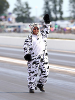 Aug. 18, 2013; Brainerd, MN, USA: Crew member for NHRA top alcohol dragster driver Gord Gingles dressed as a cow during the Lucas Oil Nationals at Brainerd International Raceway. Mandatory Credit: Mark J. Rebilas-