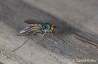 1225-0905  Long-Legged Fly, Family: Dolichopodidae  © David Kuhn/Dwight Kuhn Photography
