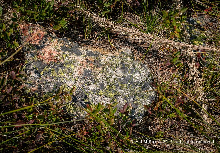 8.5.18 - Lichen Rock...