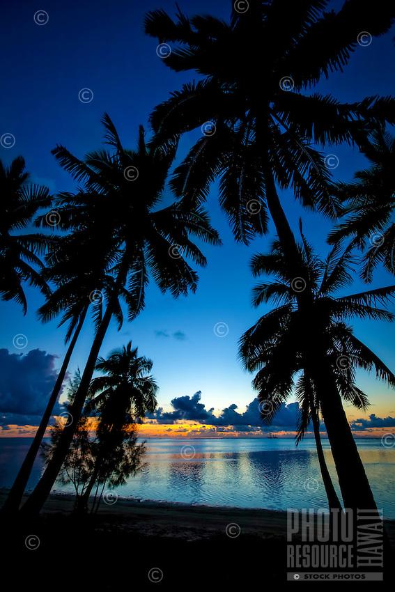 A silhouette of palm trees at sunset, Amuri Beach, Aitutaki Island, Cook Islands.