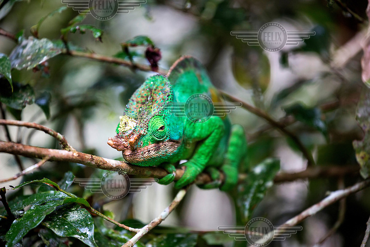 A chameleon in the grounds of the Palmarium Hotel.
