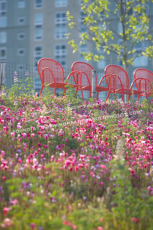 early morning sunlight illuminates the native wildflowers blooming in the Meadow portion of the park, backed by a row of empty chairs.