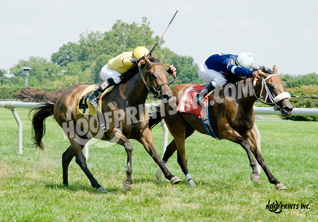 Lulu Island winning at Delaware Park on 8/20/14