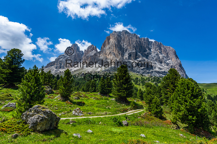 Italy, South Tyrol (Trentino - Alto Adige), Dolomites, near Selva di Val Gardena: alpine pasture with Sasso Lungo mountain near Sella Pass Road | Italien, Suedtirol (Trentino - Alto Adige), oberhalb von Wolkenstein in Groeden: Almwiese vorm Langkofel an der Sella-Joch-Passstrasse