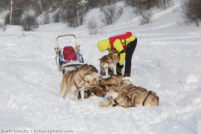 A team rests in the trail on the second day of the Volga Quest Sled Dog Race.  Russia Sunday 26 January 2014