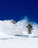 USA, Utah, young woman skiing Lee's Tree in the deep snow, Alta Ski Resort