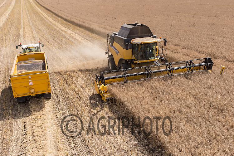 Harvesting oilseed rape,Lincolnshire<br /> Picture Tim Scrivener 07850 303986
