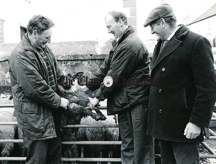 At the closing sheep sale in Kilfenora were (left to right) John Greene, JJ O'Gorman and John Healy, all from Liscannor - January 1, 1999.