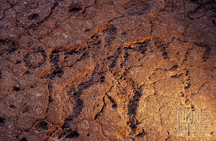Petroglyph detailof a man, Waikoloa Beach Resort.