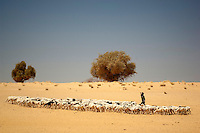An Arab Moor shepherd herds his goats near the Sahara Desert town of Boujbeja. /Felix Features