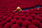 Pictured: A worker surrounded by colourful incense sticks.<br /> <br /> Millions of incense sticks are bundled together as workers lay them out to dry.   The bunches of fuchsia-coloured bamboo sticks stretch across more than 10,000 sq ft.<br /> <br /> Workers kneel on blue sheets laid on top of sand as they carry out the traditional drying process.   Once dried, the odourless sticks will be taken to factories where distinct aromas will be added.   SEE OUR COPY FOR DETAILS <br /> <br /> Please byline: Azim Khan Ronnie/Solent News<br /> <br /> © Azim Khan Ronnie/Solent News & Photo Agency<br /> UK +44 (0) 2380 458800