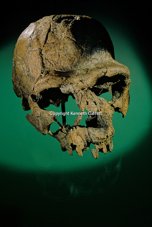 Dawn of Humans; The First Steps, Homo ergaster, KNMER 3733, 1.8 to1.4 million years ago, Eastern Africa