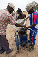 Millet Cultivation.  Using a Soil Ripper, Compost and Fertilizer can be quickly placed in long rows, awaiting the seeds.  Kaolack, Senegal.  These farmers are of the Serer ethnic group.
