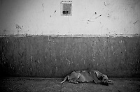 A dog lies on the floor in a corridor at the Rajan Babu TB hospital in New Delhi, India.