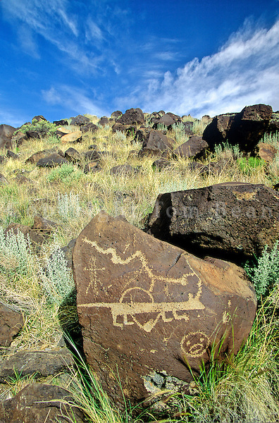 Petroglyphs on boulders at Rinconada Canyon at Petroglyph National Monument, Albuquerque, New Mexico, USA, TomBean_Pix_1949