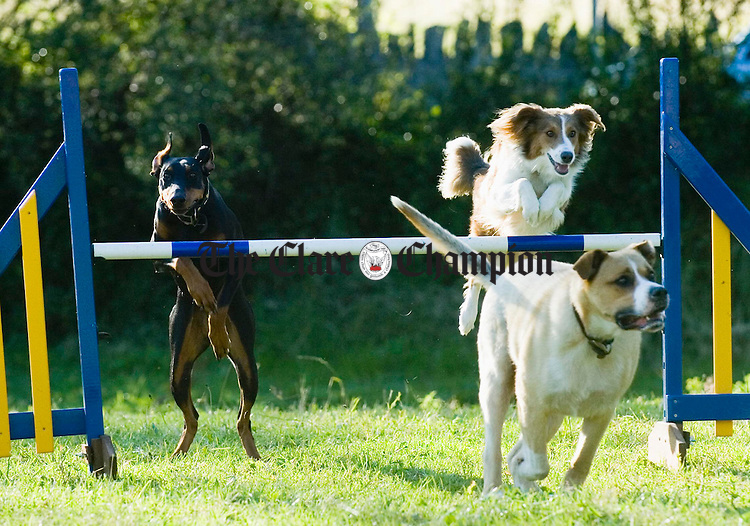 Xena, Oscar and Snowey in action at Peter Barks. Photograph by John Kelly.