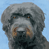 Painting of Bouvier Des flandres dog