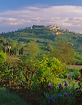 Tuscany, ITlay:  Morning sun on a spring garden and vallely with the hill town of Montepulciano on the distant hill top - Val d'Orcia area