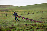 USA, Oregon, Enterprise, Cowboy and Rancher Todd Nash drags a fence gate through a meadow
