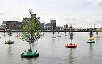 Nederland Rotterdam 2016 . In de Rijnhaven dobberen twintig bomen. Het is een ontwerp van kunstproducent Jeroen Everaert. Het drijvende bos zal vijf jaar blijven. Foto Berlinda van Dam / Hollandse Hoogte