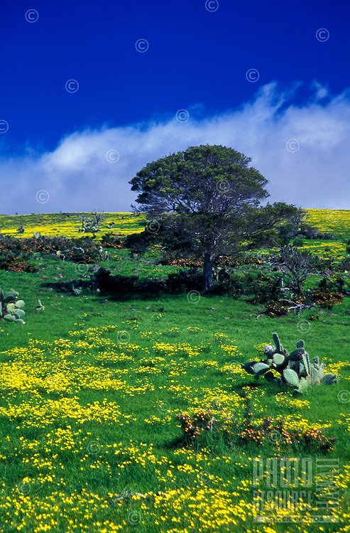 Scenic meadow land in Waimea, North Kohala
