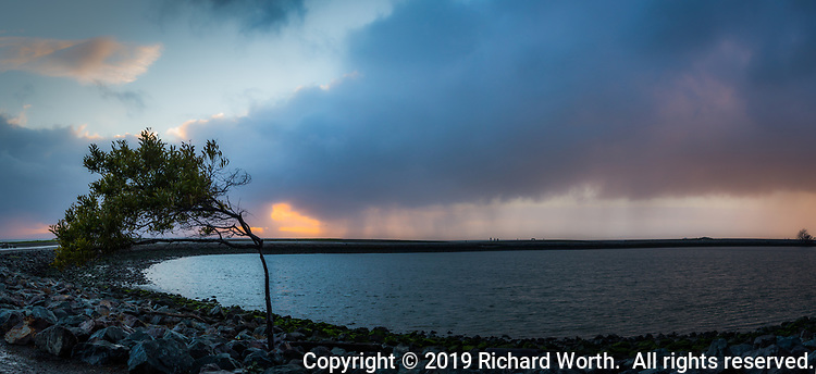 """The """"Wind Blown Tree"""" in a multiple image panoramic at the San Leandro Marina with a background of breaking storm clouds at sunset, some clouds still raining on parts of the San Francisco Bay area."""