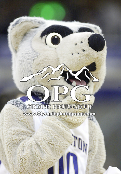 14 December 2008:  The Washington Huskies mascot Harry tossed t-shirts into the crowed during a timeout against Portland State at the Bank of America Arena at Hec Edmundson Pavilion in Seattle, WA.  Washington won 84-83 over Portland State.