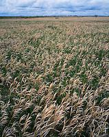 Grasslands in early spring along Skyline Vista; Theodore Roosevelt National Park, ND