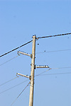 A flock of birds rest on a power line.