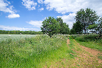 Farm track with trees and field margins - Lincolnshire, June