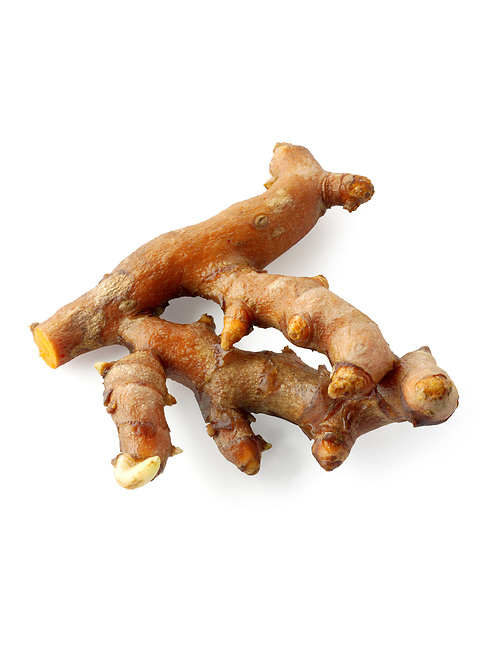 Fresh turmeric  or tumeric root (Curcuma longa) against a white background