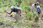 Helena B. Mensahn (left), 37, and other women prepare the ground for planting on a six-acre farm where several dozen women are farming cassava in Mount Barclay, Liberia. The income-generating project is administered by the National Federation of Women Employees and Allied Workers, with financial support from United Methodist Women.
