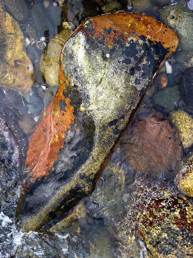 Rock on Shoreline, Fort Madison, Castine, Maine, US