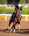 OCT 28: Breeders' Cup Sprint entrant Engage, trained by Steven M. Asmussen, at Santa Anita Park in Arcadia, California on Oct 28, 2019. Evers/Eclipse Sportswire/Breeders' Cup