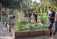 Photo from the F.E.A.S.T (Food Energy and Sustainability Team) student-run organic garden at UEPI.<br />