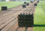Rolls of turf grass standing on a pallet in a field, Blaxhall, Suffolk, England