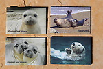 2x3 photo magnets of elephant seals, harbor seals and a sea otter
