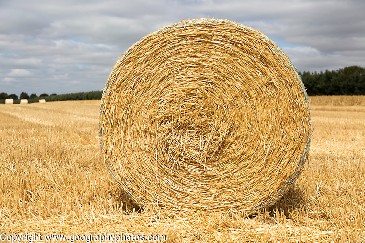 Round straw bale in flat field with overhead cumulus cloud, Sutton, Suffolk, England, UK