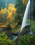 Silver Falls State Park, OR<br /> Aside view of Middle North Falls (106 ft) in Silver Creek Canyon in fall