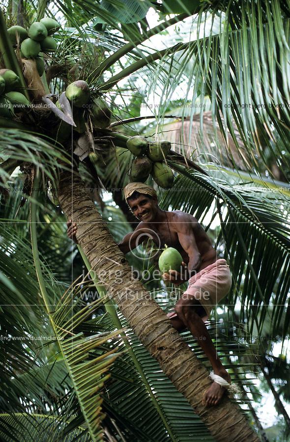 INDIA, harvest of coconut at farm near Mangalore / INDIEN Karnataka, Ernte von Kokosnuß auf Kokosplantage bei Mangalore, Gewinnung von Kokosfaser Coir Copra Kokosöl