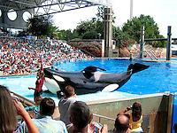Shamu Killer Whale Show at Sea World Orlando