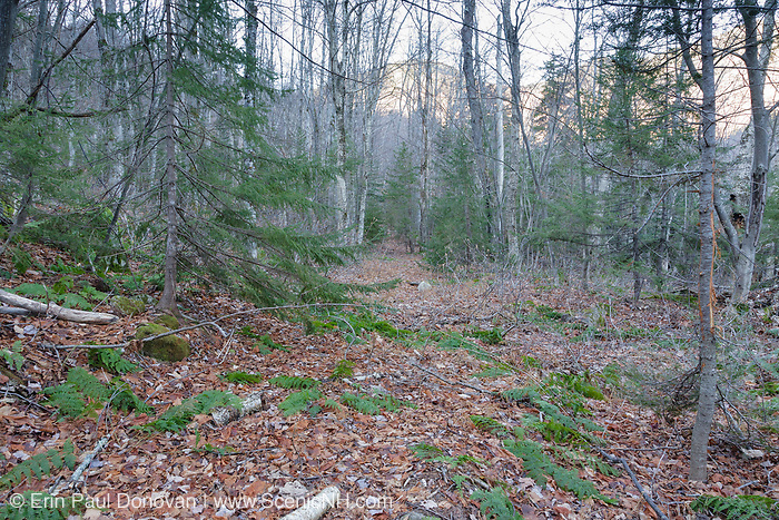 The location of what is believed to be the old Monahan Camp site along the abandoned Swift River Railroad in the Sabbaday Brook drainage of Waterville Valley, New Hampshire. Operated by the Conway Lumber Company, this was a logging railroad that operated from 1906-1916.